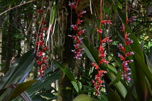 Hawaiian Tropical Botaniacal Gardens Big Island Hawaii